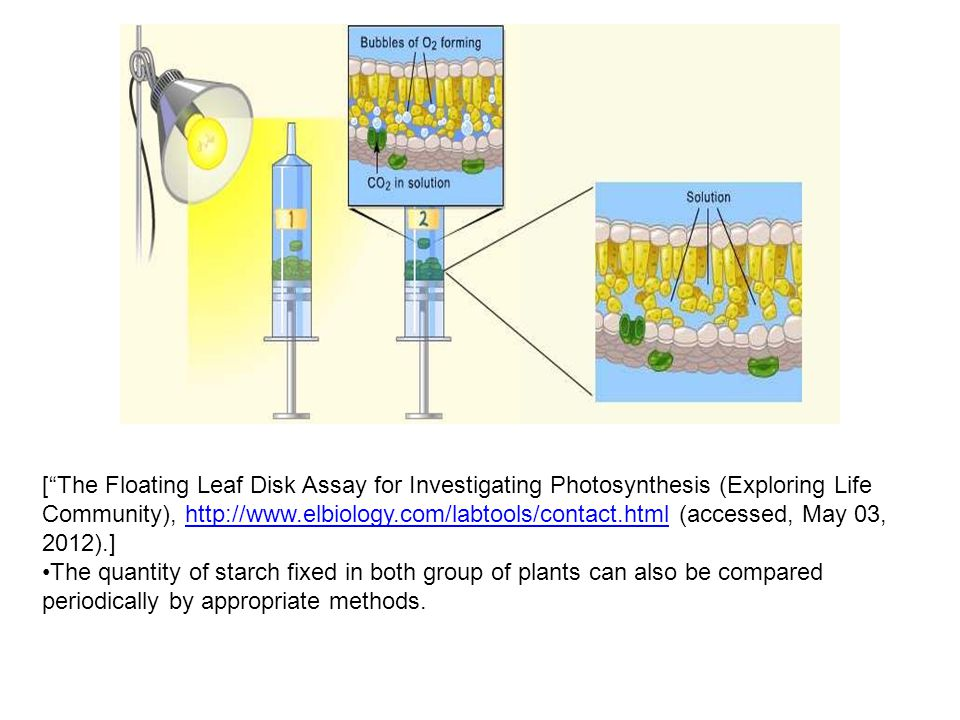 [ The Floating Leaf Disk Assay for Investigating Photosynthesis (Exploring Life Community), http://www.elbiology.com/labtools/contact.html (accessed, May 03, 2012).]